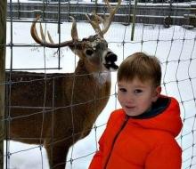 Deer Photo Bomb