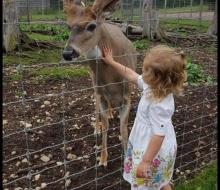 Deer Ranch